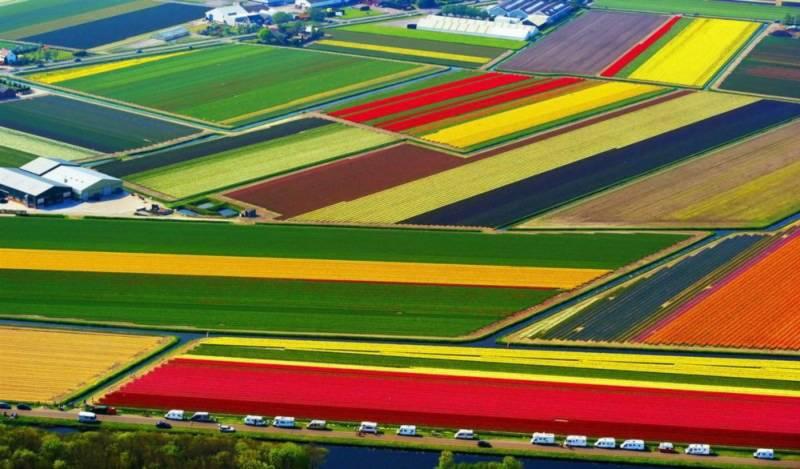 thien duong, hoa tulip, Hà Lan,