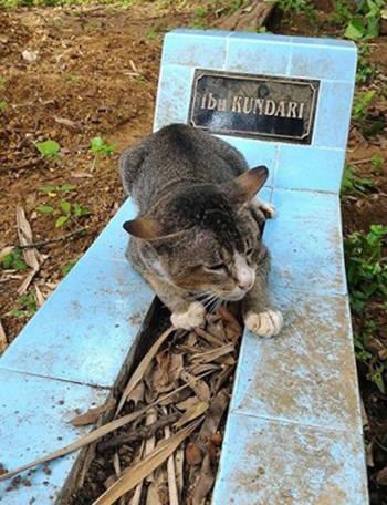Ảnh1: Người ta thường thấy con mèo nằm bên mộ chủ không rời (Ảnh: SWNS)