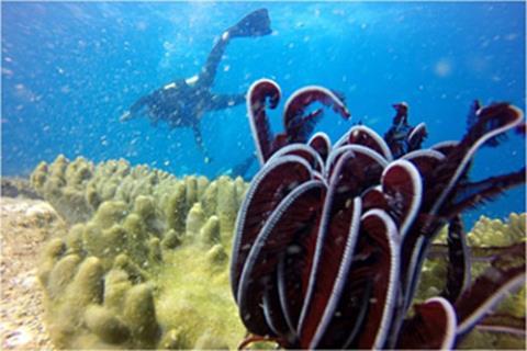 Khu sinh thái biển Hòn Cau . Ảnh baodatviet.vn