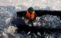 Thu gom cá chết ở Hồ Tây