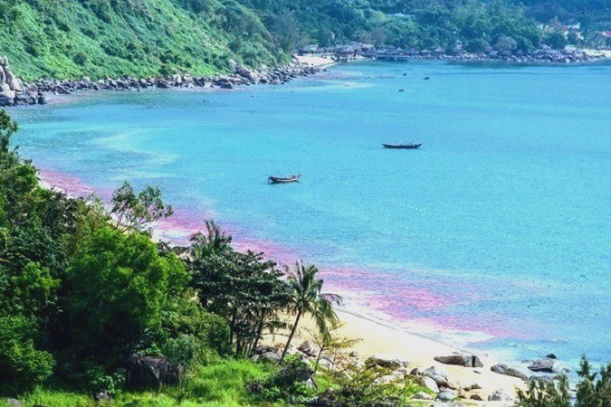 Sáng ngày 24/2, một tài khoản đã đăng tải lên trang Facebook Quản lý đô thị Đà Nẵng hai bức ảnh chụp một vệt nước dài màu đỏ, nằm sát ven bờ. Theo người đăng tải, hai bức ảnh được chụp vào sáng ngày 24/2, tại khu vực Bãi Nam (Sơn Trà).