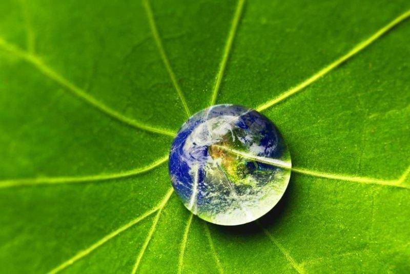"""""""Một hạt cát, một thế giới, một chiếc lá một cõi Phật"""". (Ảnh minh họa từ Internet)"""