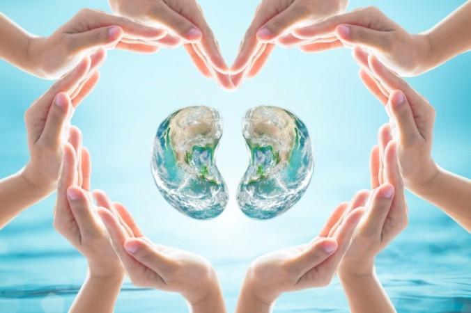 Trong Trung y, thận là cái gốc của cơ thể người (ảnh: Chinnapong/Shutterstock)