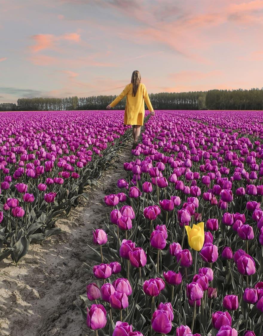 tulip-9