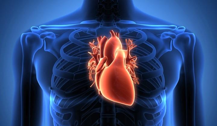 tim, thay tâm thuật, tâm hồn, nguyên thần, linh hồn, Bài chọn lọc,