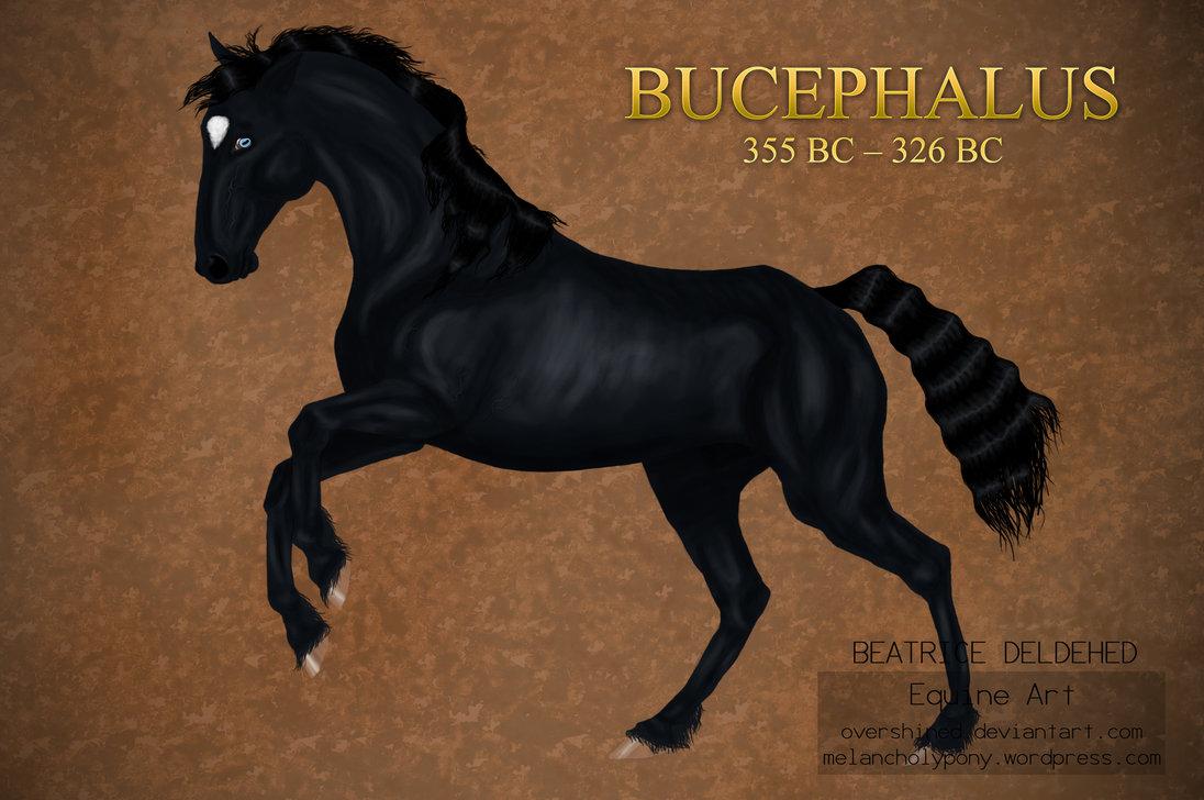 Bucephalus