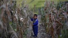 Ở Triều Tiên, cứ 5 trẻ thì 1 trẻ bị còi cọc do suy dinh dưỡng kinh niên. (Ảnh qua CBS News)