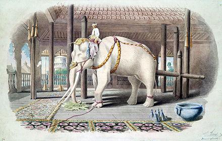 Một con voi trắng tại Cung điện Amarapura, Miến Điện, năm 1855. (Ảnh từ wikipedia.org)
